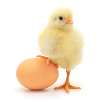 0467-chick_and_egg.jpg