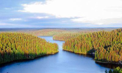 0496-repoveden_kansallispuisto_kesayonauringossa.jpg